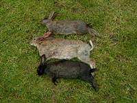 3 rabbits in 25 minutes